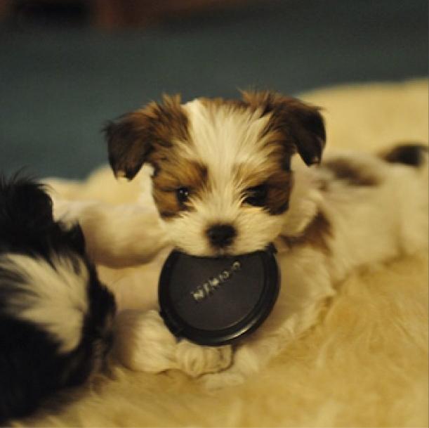 puppypalace