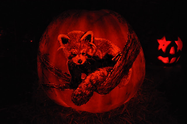 Red Panda pumpkin
