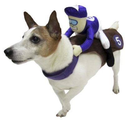 jockey  sc 1 st  Fuzzy Today & Top 10 Dog Costumes You Can Buy at the Store | Fuzzy Today