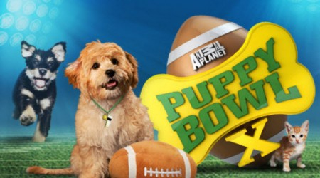 house-party-puppy-bowl-sweepstakes-450x250