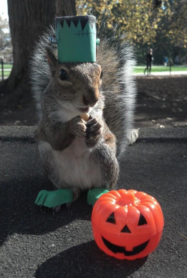 Penn-State-Squirrels-11-685x1018