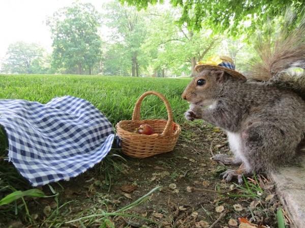 Penn-State-Squirrels-18-685x513