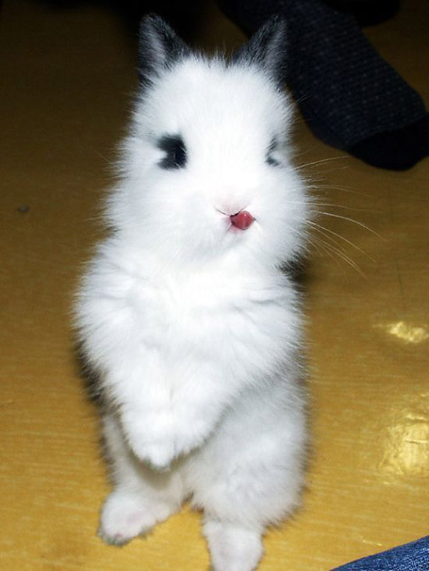 cute-bunnies-tongues-13