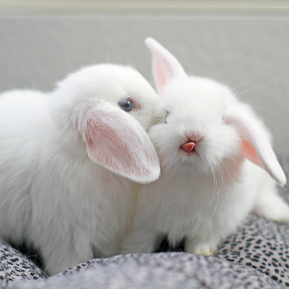l-I-never-realized-how-cute-baby-bunny-tongues-are(1)
