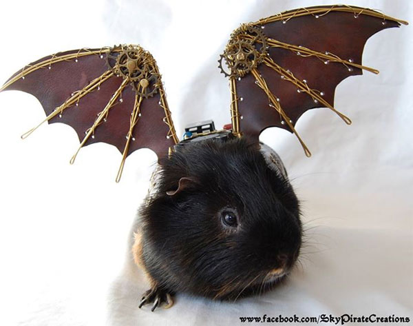 Steampunk Guinea Pig Wings | Fuzzy Today