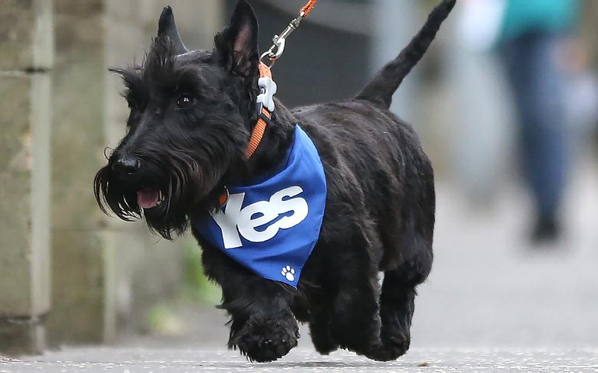 scotland-dog_3042838k
