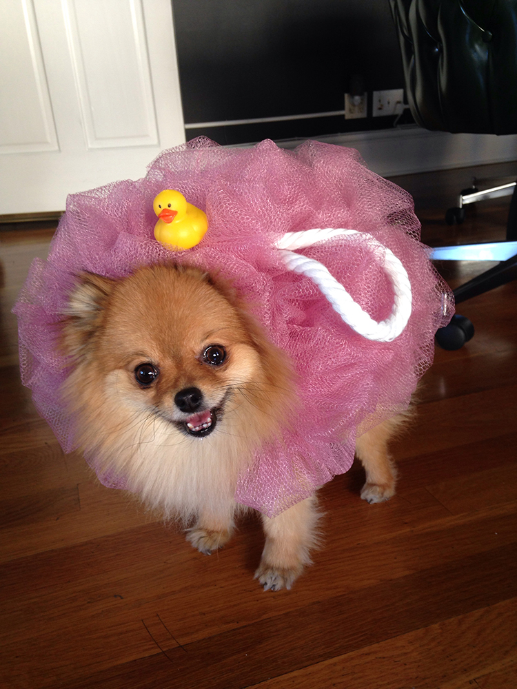 top 10 inventive dog halloween costumes fuzzy today