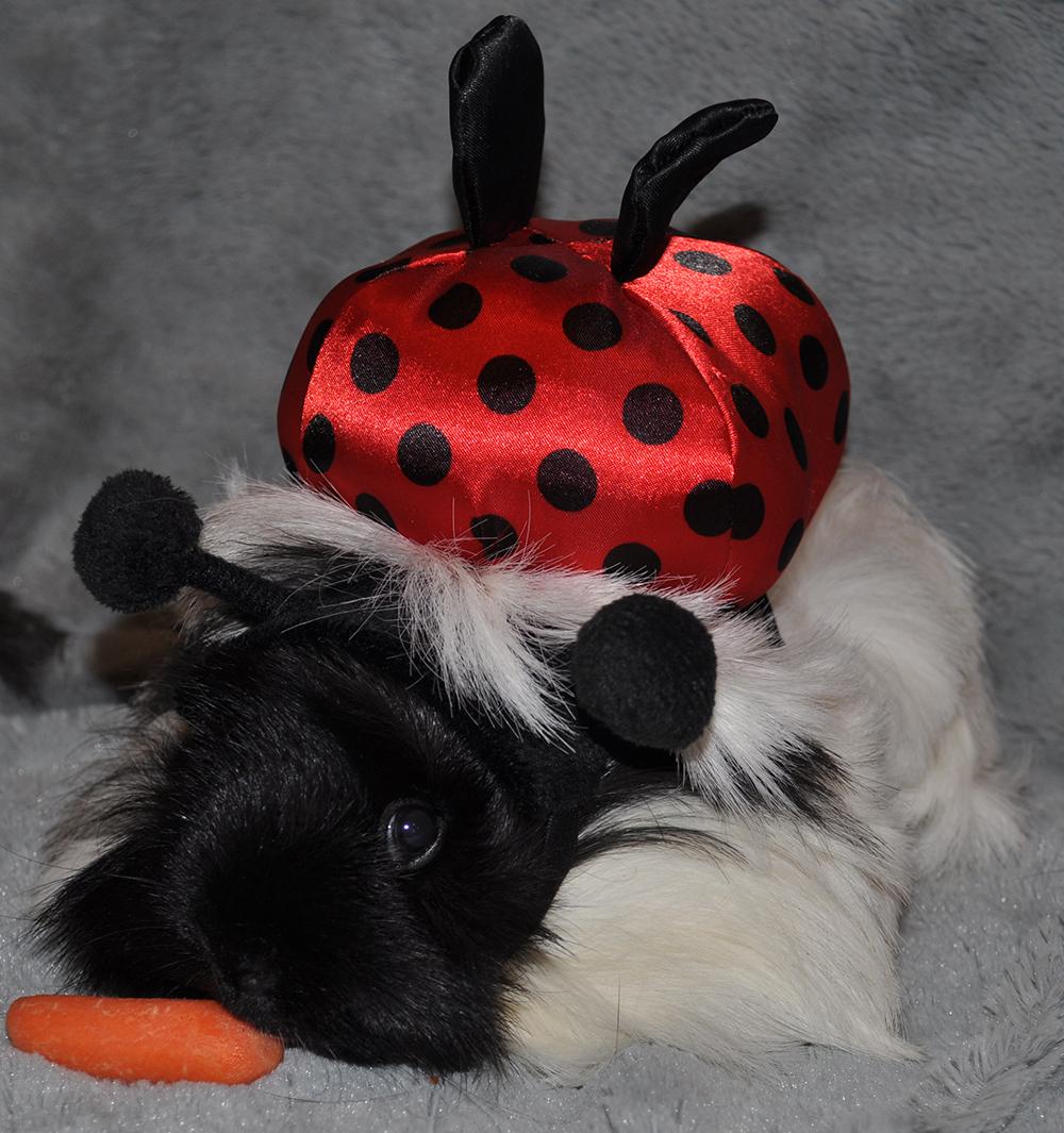 ladybugsmall1