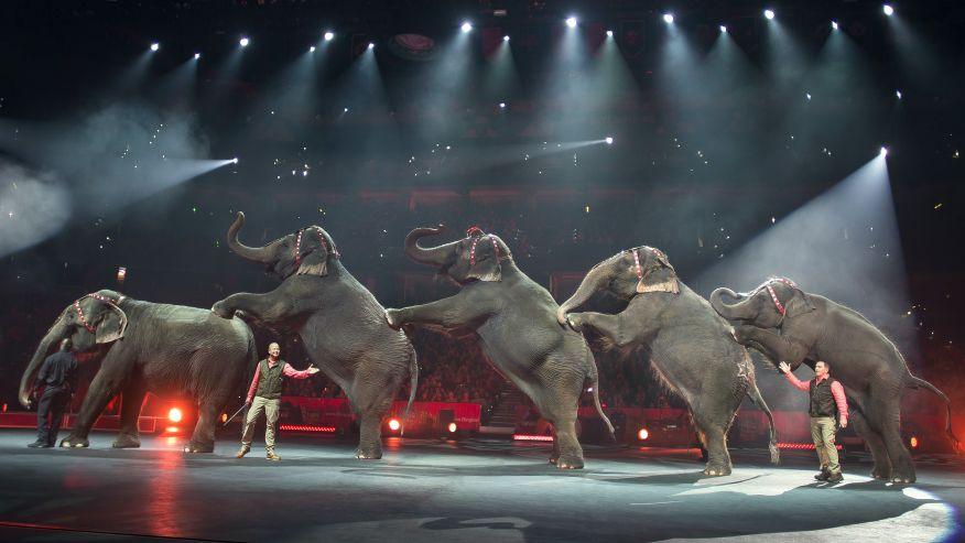 Ringling Bros Circus ap
