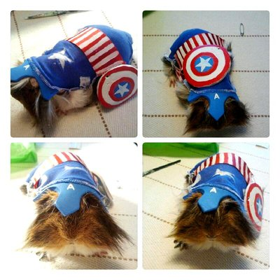 my_guineapig_as_captain_america_by_dessyng-d5gk48i