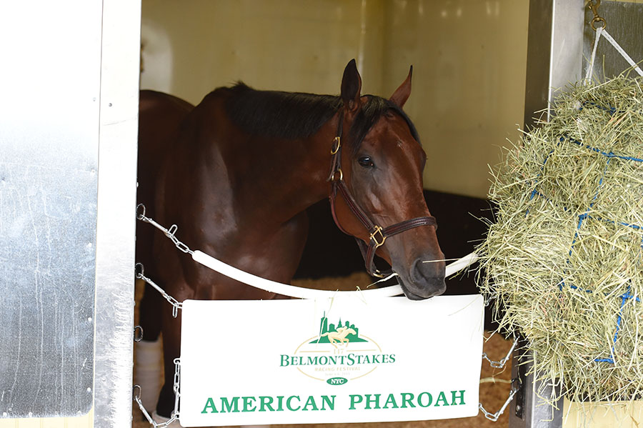 American_Pharoah_Arrival28