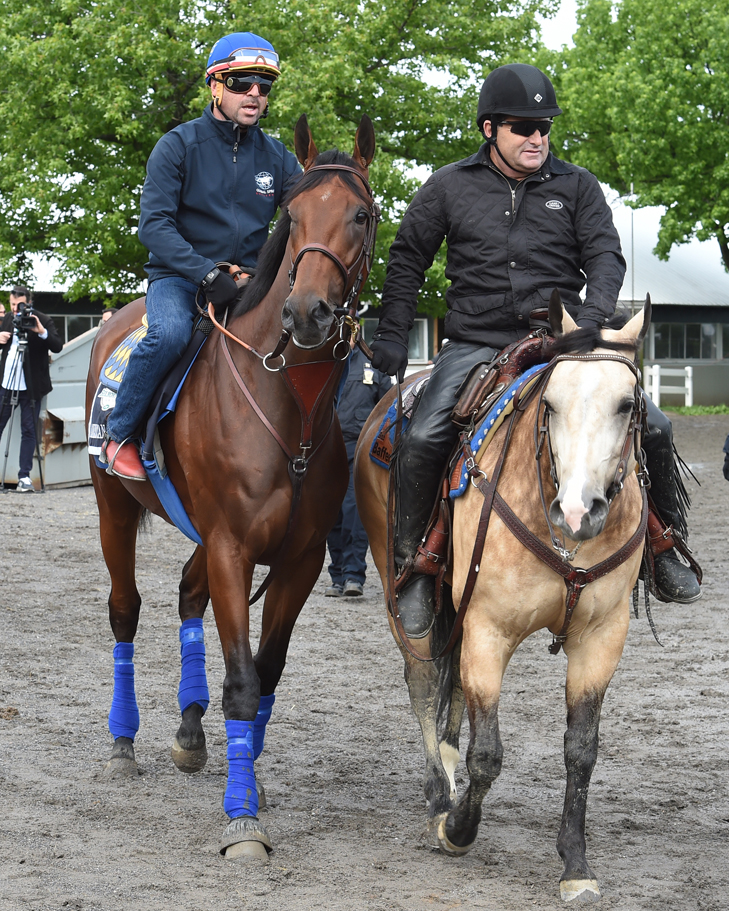 American_Pharoah_June_3_credit_susie_raisher4